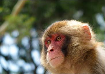 Aso monkey showman Theater